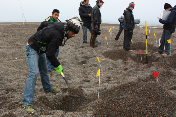 Edgar Caballero, during the Mexico Alaska Youth Interchange, helped researchers in the field. Here, they are digging a gravel point to find bones from ancient Inupiaq burials.