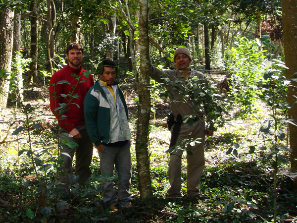 Joel Correia, in a fair-trade certified yerba mate plantation in southeastern Paraguay during his M.A. research in 2011.