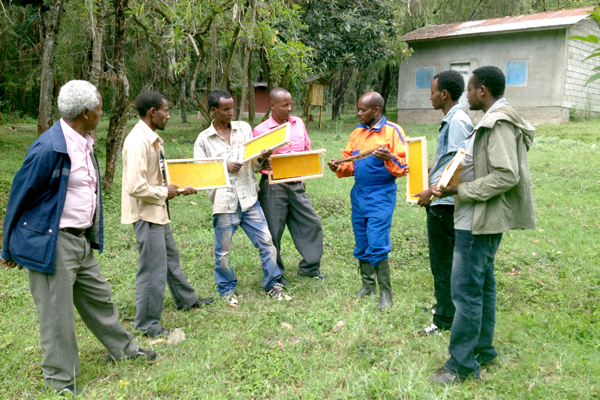 Tariku Olana during a community training in improved beekeeping technology at college apiary sites.