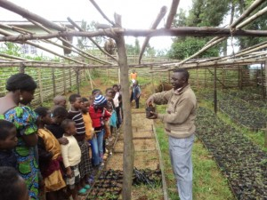 Tree germination taught to children in nursery.
