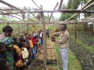Tree germination taught to children in nursery.