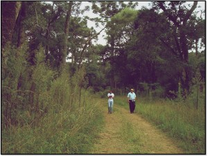 Ethnobotanical walk in the Araucaria Forests of Southern Brazil with Mr. Oswaldo Rupel, local resident and farmer. Araucaria Forests are part of the Brazilian Atlantic Rainforest, with less than 7% remaining of the original cover.