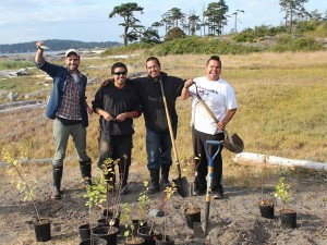 Transplanting some island-grown heritage plum saplings with Lekwungen George brothers in Chatham Islands.