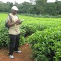 A researcher collecting field data on a small-scale rural tea farm in east Africa, that practices organic farming incorporating agroforestry and maintenance of natural hedges and woodlots.
