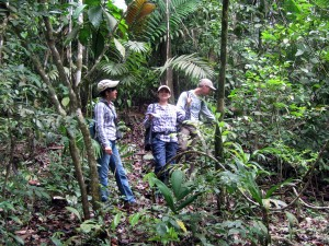 Assessing plant diversity in a forest of central Panama through identification of species.