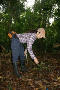 Measuring growth and survival of key tree species, most of which have local use.