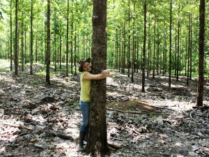 At a teak plantation in Hojancha, Guanacaste, Costa Rica during a radio knowledge management production for teak producers in July 2014.