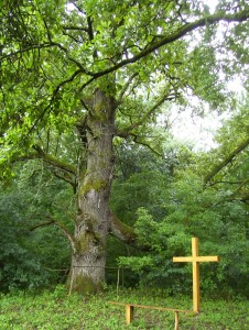 A culturally important sacred place situated around the two oldest oak trees in the Nagyerd? forest. (W Ukraine).